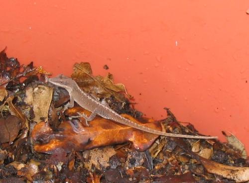 lizard040322-2.jpg