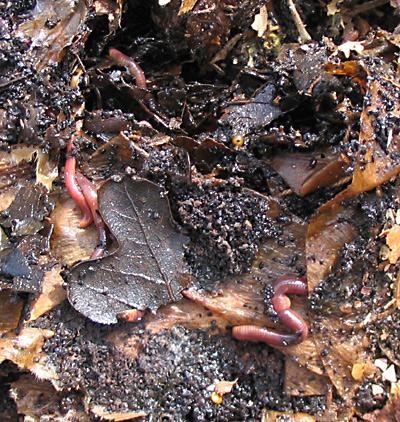 worms040307.jpg