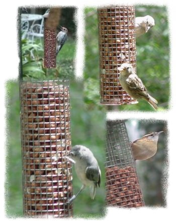 Birds on Peanut Feeder