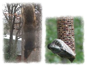 Pests on Peanut Feeder